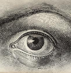 Контактна лінза не може випасти з ока
